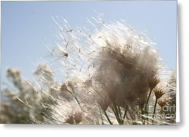 Blow Me Away Greeting Card by Julie Lueders