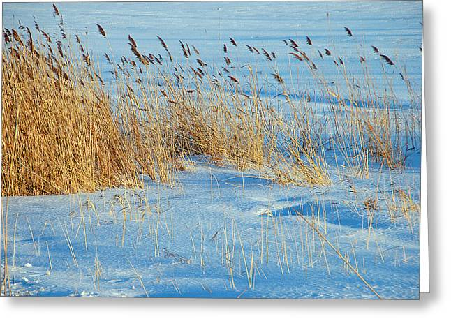 Blowing In The Wind Greeting Card by Aimee L Maher Photography and Art Visit ALMGallerydotcom