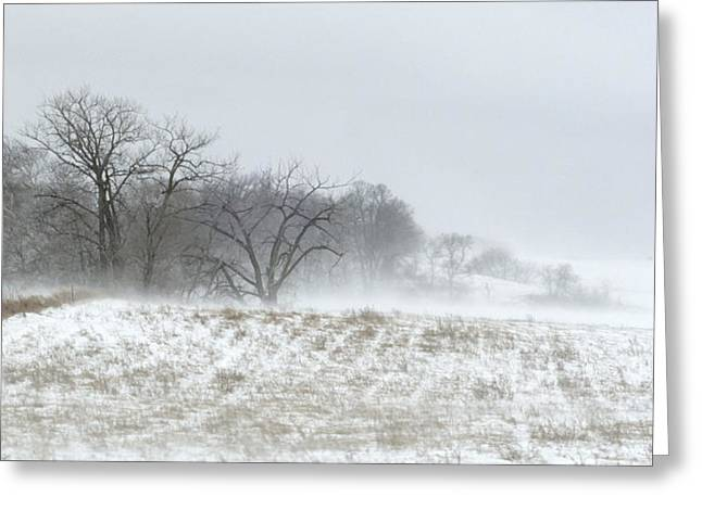 Blowing Snow Over Fields And Forest Greeting Card
