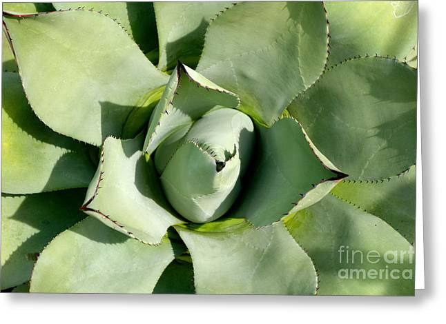 Greeting Card featuring the photograph Blue Agave by Jacqueline Athmann
