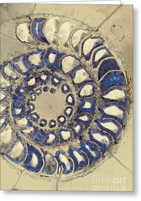 Blue Ammonite Greeting Card by Joe Pratt