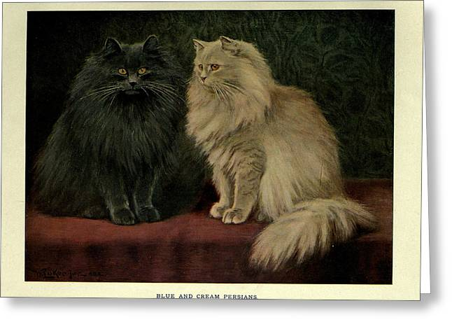 Blue And Cream Persians Greeting Card by Philip Ralley