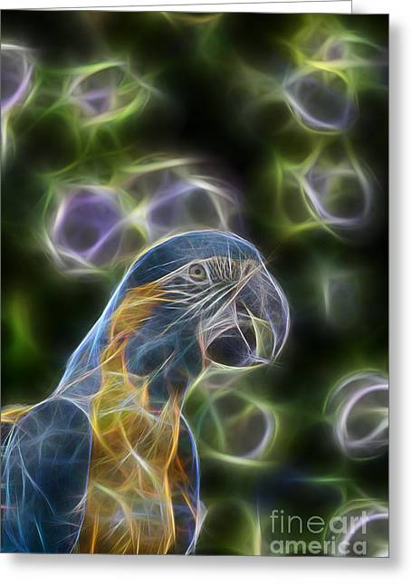 Blue And Gold Macaw  Greeting Card by Douglas Barnard