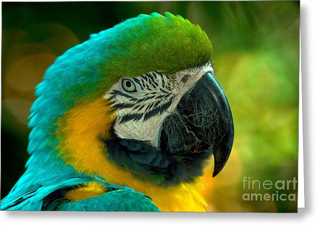 Blue And Gold Macaw Greeting Card by Mark Newman