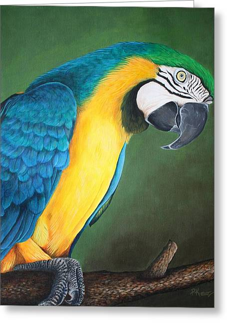 Blue And Gold Macaw Greeting Card by Pam Kaur