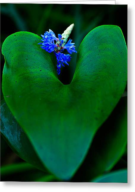 Blue And Green Greeting Card by Haren Images- Kriss Haren