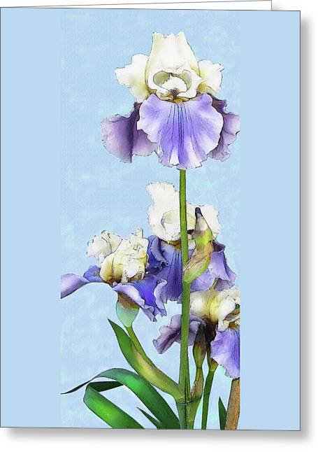 Blue And White Iris Greeting Card by Jane Schnetlage