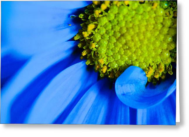 Greeting Card featuring the photograph Blue And Yellow by Erin Kohlenberg