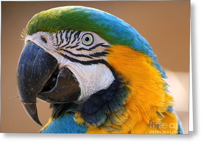Greeting Card featuring the photograph Blue And Yellow Macaw by Bob and Jan Shriner