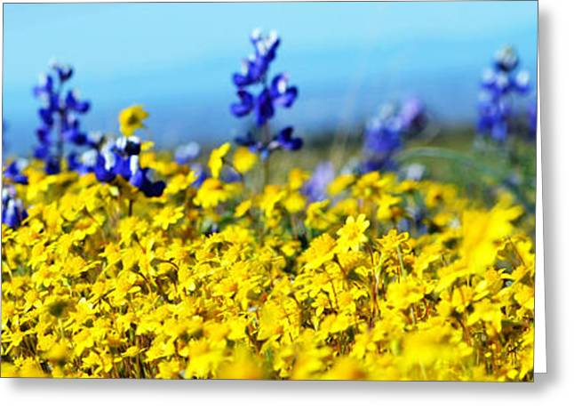 Blue And Yellow Wildflowers Greeting Card