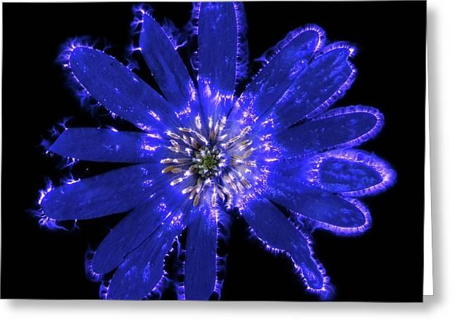 Blue Anemone Flower Greeting Card