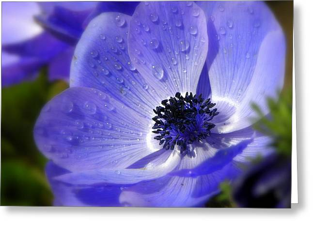 Blue Anemone Greeting Card by Martina  Rathgens