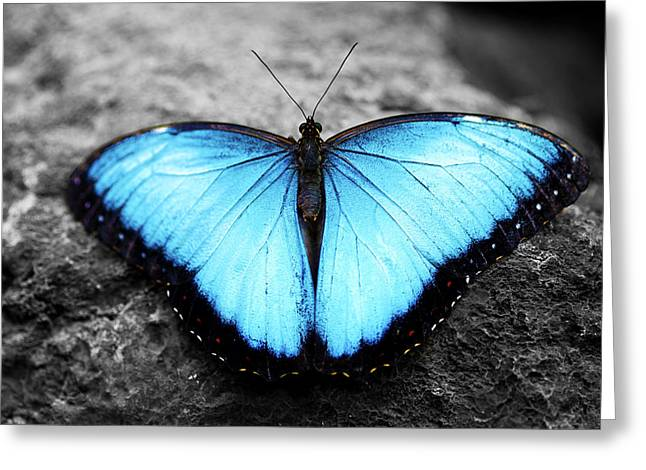 Blue Angel Butterfly 2 Greeting Card