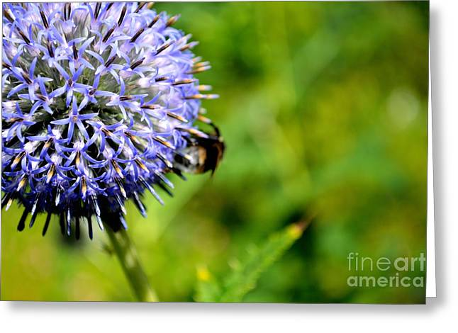 Greeting Card featuring the photograph Blue Ball Flower by Scott Lyons