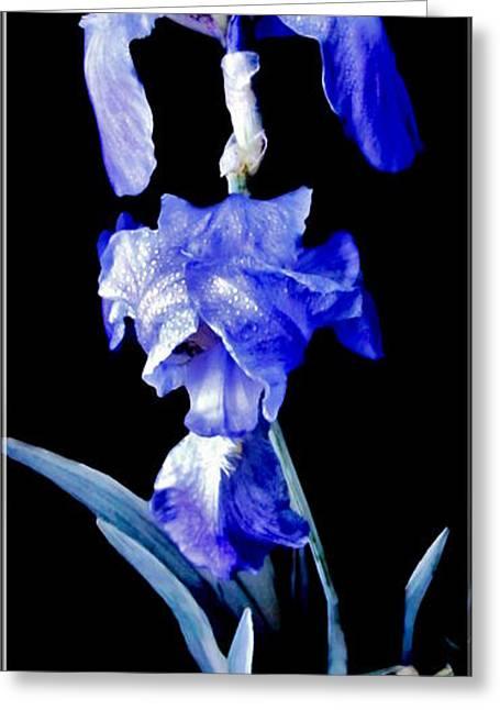 Blue Bearded Rhizomatous Irises Greeting Card by Danielle  Parent