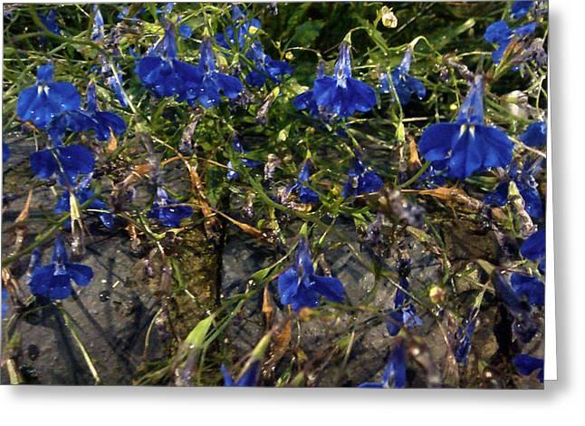 Blue Bells  Greeting Card by Diana Burlan