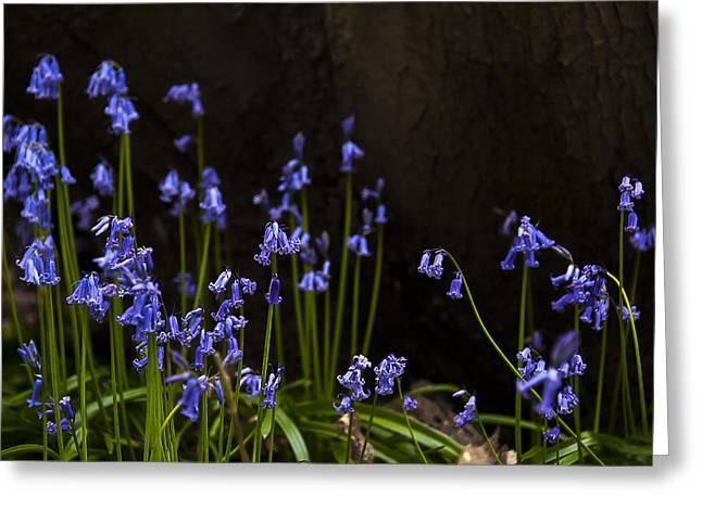 Blue Bells Greeting Card by Svetlana Sewell