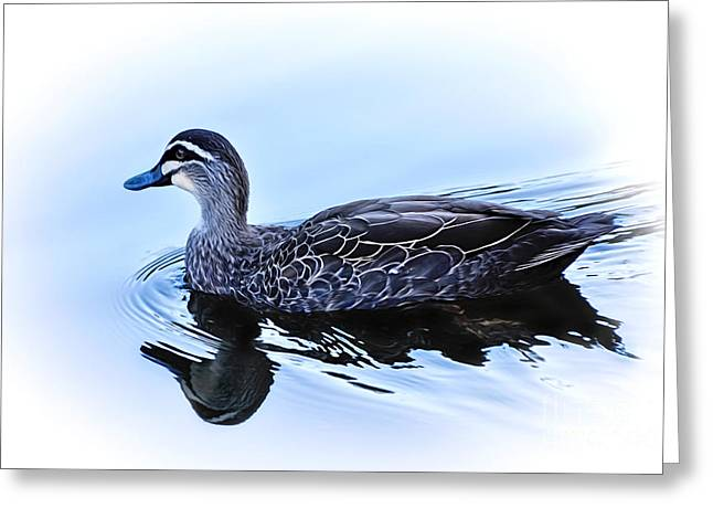 Blue Billed Duck Greeting Card by Kaye Menner
