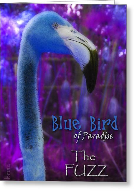 Greeting Card featuring the photograph Blue Bird Of Paradise - The Fuzz by Barbara MacPhail