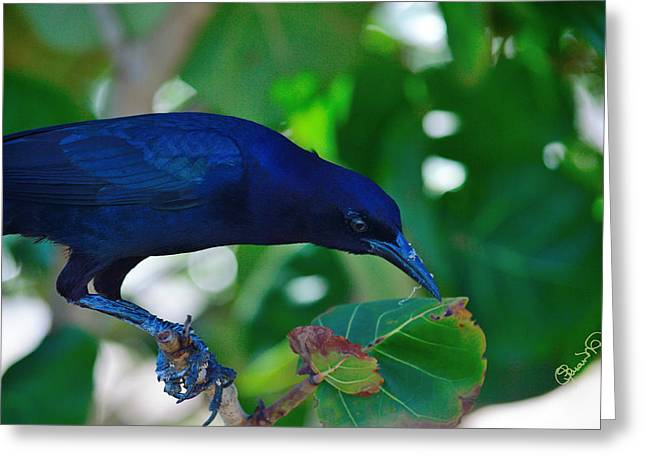 Blue-black Black Bird Greeting Card