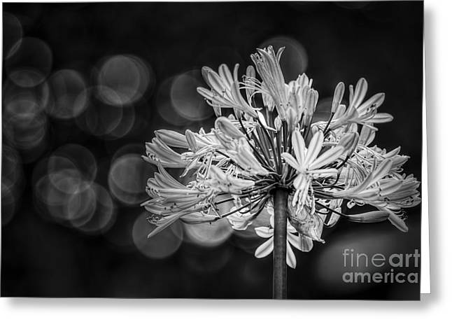 Blue Blooms B/w Greeting Card by Marvin Spates