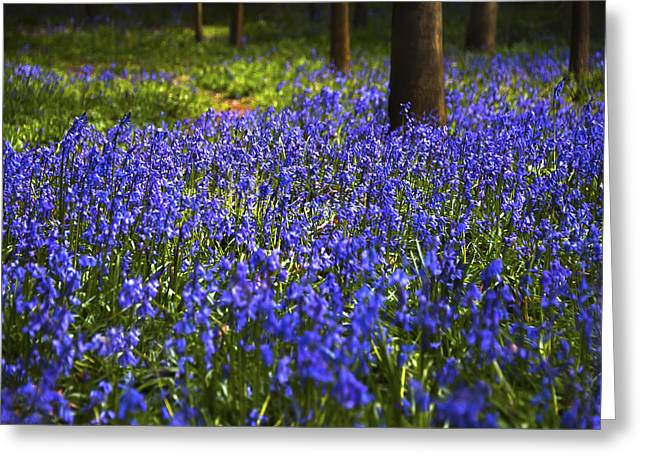 Blue Blue Bells Greeting Card by Svetlana Sewell