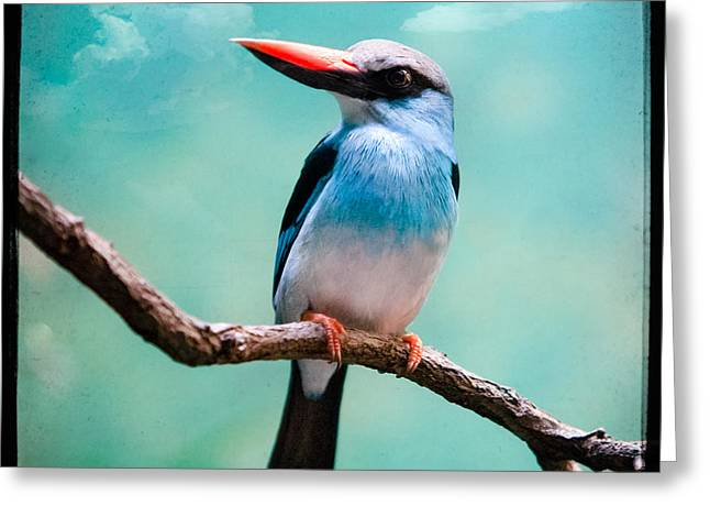 Greeting Card featuring the photograph Blue Breasted Kingfisher by Gary Heller