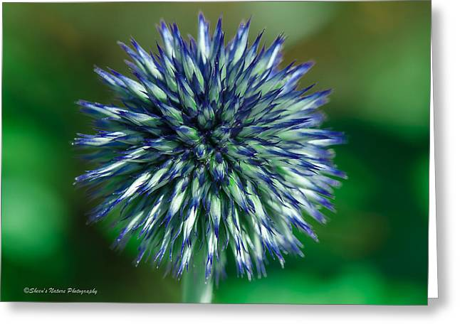 Blue Burst Greeting Card by Sheen Watkins