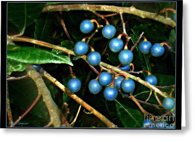 Greeting Card featuring the photograph Blue Bush Berries  by Leanne Seymour