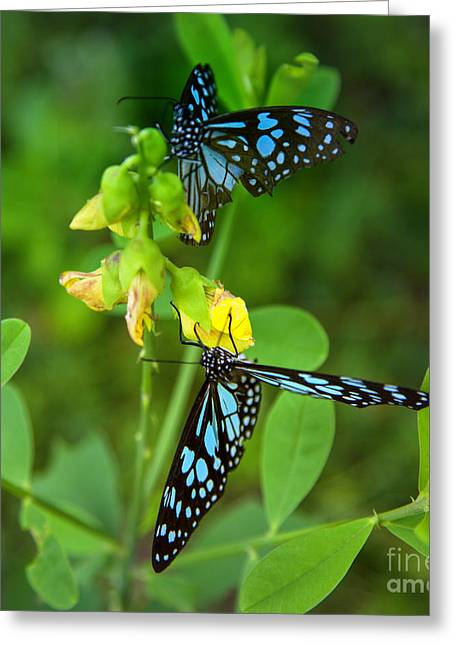 Blue Butterflies In The Green Garden Greeting Card by Regina Koch