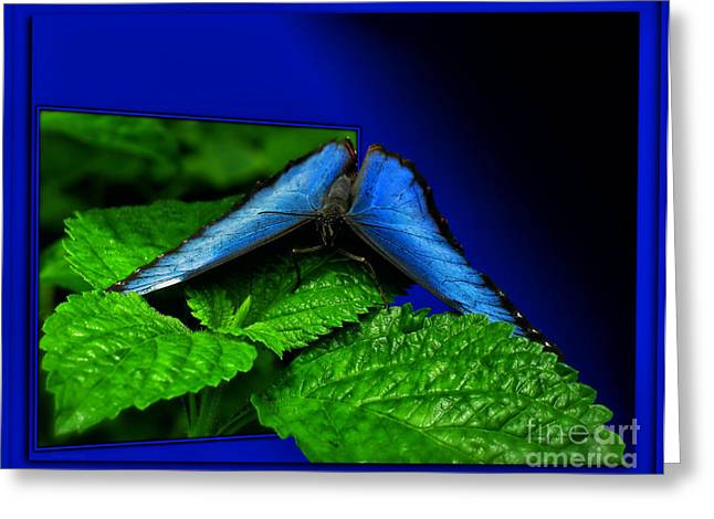 Blue Butterfly 02 Greeting Card by Thomas Woolworth