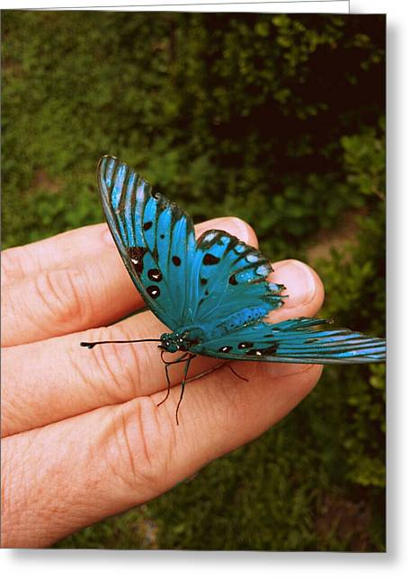 Blue Butterfly Greeting Card by Paul  Wilford