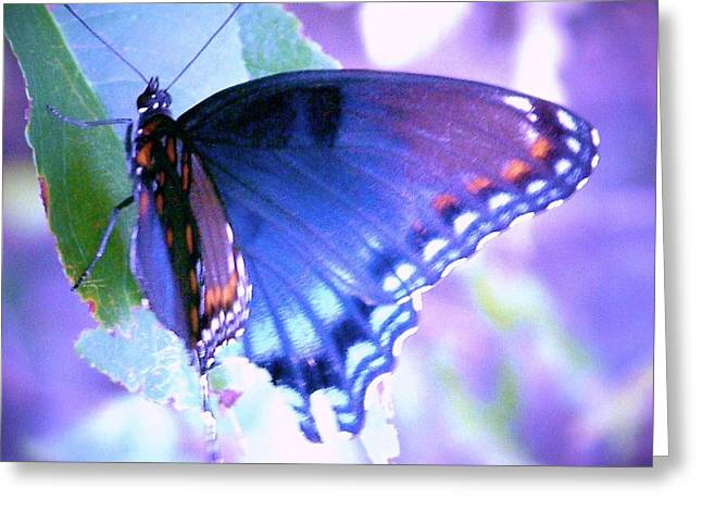 Blue Butterfly Greeting Card by Shirley Moravec