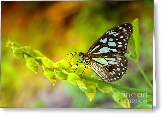 Blue Butterfly With Beautiful Colors Greeting Card by Gina Koch
