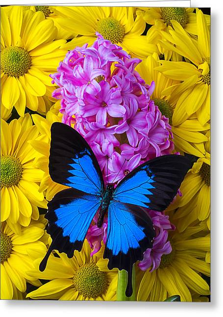Blue Butterfly With Hyacinth Greeting Card