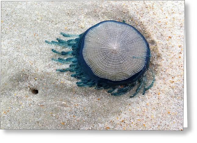 Blue Button #2 Greeting Card by Paul Rebmann