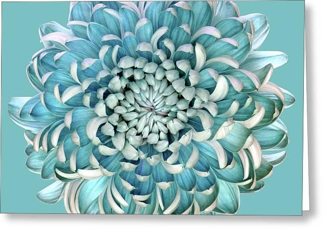 Blue Chrysanth Greeting Card