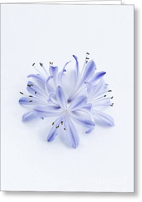 Blue Circle Greeting Card by Anne Gilbert