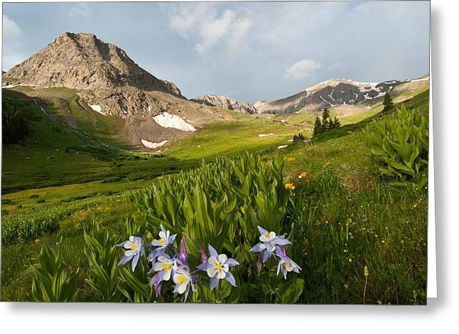 Greeting Card featuring the photograph Handie's Peak And Blue Columbine On A Summer Morning by Cascade Colors