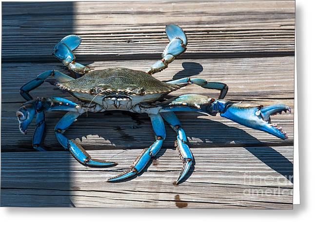 Blue Crab Pincher Greeting Card