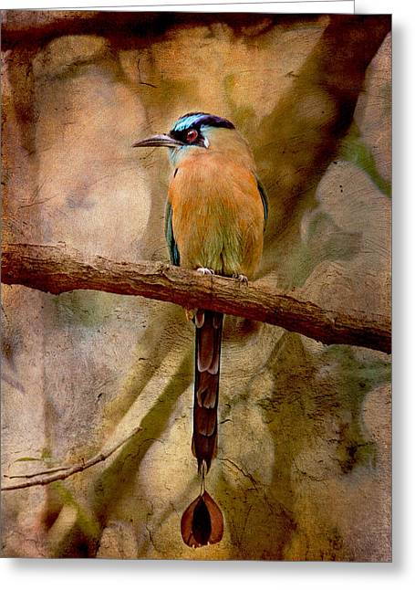 Blue Crowned Motmot Greeting Card by Peggy Collins