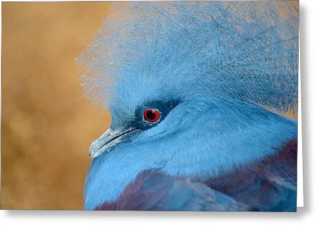 Blue Crowned Pigeon Greeting Card by T C Brown