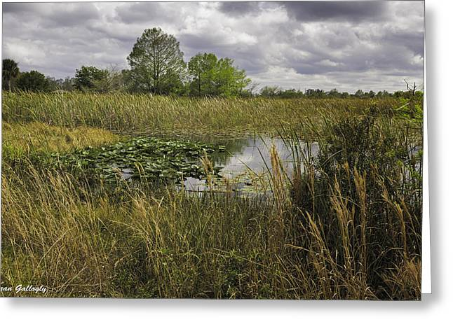 Blue Cypress Wetlands Greeting Card by Fran Gallogly