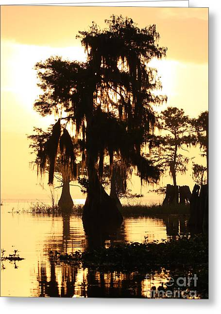 Blue Cypress Yellow Light Greeting Card by Paul Rebmann