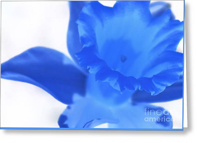 Greeting Card featuring the photograph Blue Daffodil by Andy Prendy