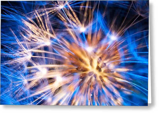 Blue Dandelion Up Close Greeting Card
