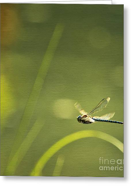 Blue Darner Dragonfly - Green Water And Light Greeting Card by Belinda Greb