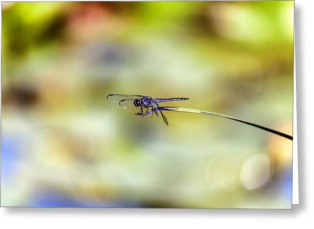 Blue Dasher On Acid Greeting Card