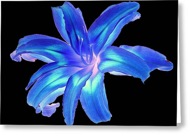 Greeting Card featuring the photograph Blue Day Lily #2 by Jim Whalen
