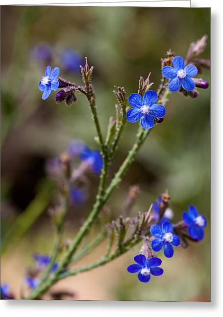 Greeting Card featuring the photograph Blue Delight by Uri Baruch